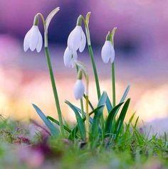 Идеи на тему «Полевые цветы» (390) в 2021 г | цветы, природа, растения