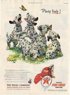 Texaco Dalmatian Puppy Dog Puppies Ad T (1953)