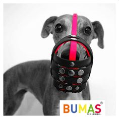 Buy the best custom-made dog muzzle from BUMAS. A custom muzzle is the best muzzle for your canine or beloved pet. These colourful and comfortable best fit muzzles are made from BioThane - original BUMAS are animal welfare certificated. Dog Muzzle, Custom Made, Your Dog, Pets, Color, Colour, Colors, Animals And Pets