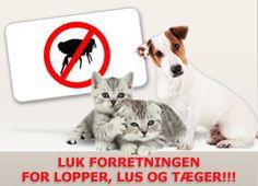 Fjern Lopper fra Hunde og Katte - Råd og vejledning → www.petdreams.dk