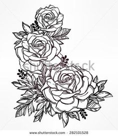 blue roses drawing vintage - Google Search