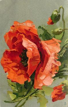Three poppies, large central flower, half open buds above & below to right vintage postcard - C. Klein by Watercolor Flowers, Watercolor Paintings, Poppies Painting, Poppies Art, Flower Paintings, Painting Abstract, Arte Floral, Botanical Art, Beautiful Paintings