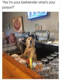 Dog, Meme, Funny animal, Internet meme Meme: Yes I'm your barktender what's your poison ?1