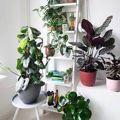 house plants, greenery, home decor, home decor with hoise plants ##houseplants #greenery