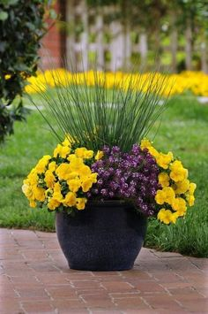 Container Flowers Textured grasses paired with colorful, Cool Wave pansies can punch up your front porch containers in spring. Container Flowers, Flower Planters, Garden Planters, Flower Pots, Full Sun Container Plants, Flower Ideas, Outdoor Flowers, Outdoor Plants, Outdoor Gardens