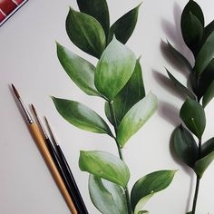 Just some beautiful leaves. When we take pictures for our archive we often forget to get some great shots of leaves. We always run short of… Watercolor Leaves, Watercolor Artwork, Plant Illustration, Watercolor Illustration, Bullet Journal Art, Watercolor Techniques, Art Sketchbook, Beautiful Paintings, Painting Inspiration
