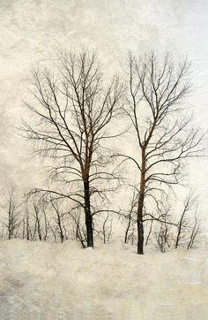 Marlene Ford - Bare branches in winter, Saskatchewan