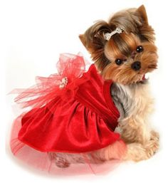 Christmas Dog Dress- Dog Dresses, Chihuahua Dog Clothes, Puppy Dress, Fancy Dog Dress, Clothes