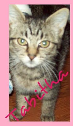 Tabitha found her forever home 9/15/12! Congratulations Tabitha :)
