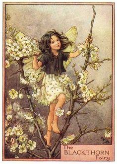 The Blackthorn Fairy ♡
