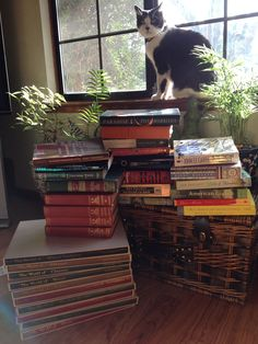 Lula and my book haul