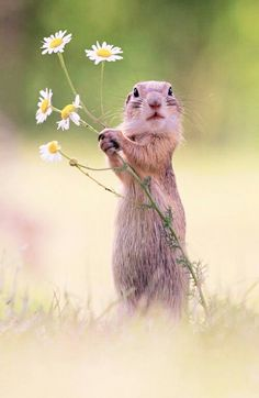 Will you make me the happiest squirrel in the world and be my forever mate? European Ground Squirrel - title A Handful of Flowers Nature Animals, Animals And Pets, Baby Animals, Funny Animals, Cute Animals, Nature Nature, Flowers Nature, Flowers Garden, Cute Creatures