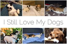 I Still Love My Dogs - the poor pups don't get enough attention but I still love them! I Love Dogs, Be Still, Pup, Cute Animals, About Me Blog, My Love, Pretty Animals, Cutest Animals, Baby Dogs