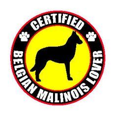 "CERTIFIED BELGIAN MALINOIS LOVER 4"" STICKER #DecalsStickers"