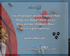 I wish people would realize that Dogs are denpendent on us, they are like children, their trust is put upon us. www.rockwellpetspro.com. #Dog