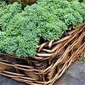 10 Plants for Your Fall Vegetable Garden