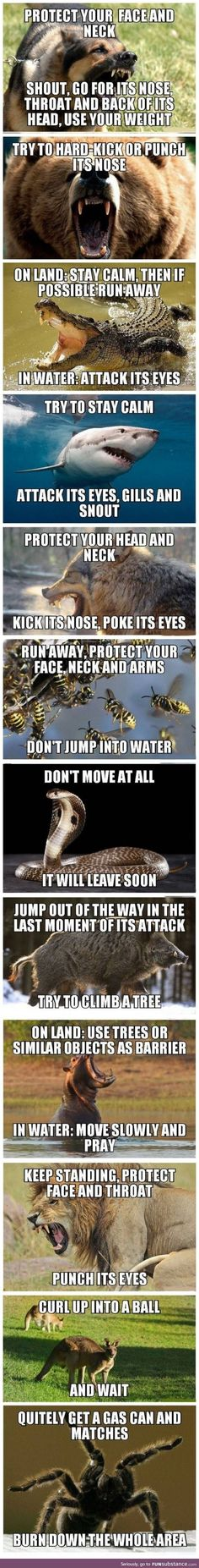 Funny lol -- Survival tips Daily Funny jokes Survival Life Hacks, Camping Survival, Survival Guide, Survival Skills, Survival Gear, Outdoor Survival, Survival Shelter, Outdoor Camping, By Any Means Necessary