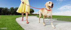Stock Photo : Girl walking dog in park