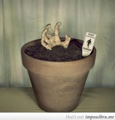 """cool idea for the garden or walkway area, maybe different types of body parts with labels like in an herb garden. """"shuffling horror"""", """"groaner"""", """"speed demon"""", etc"""