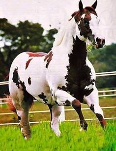 Horse Love the color Horses And Dogs, Cute Horses, Horse Love, Wild Horses, American Paint Horse, American Quarter Horse, All The Pretty Horses, Beautiful Horses, Animals Beautiful