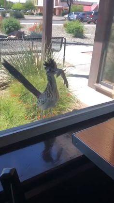 [GIF] I brought you food, open the door Funny Birds, Cute Funny Animals, Beautiful Birds, Animals Beautiful, Animals And Pets, Baby Animals, Wild Animals, Tier Fotos, Cool Pets