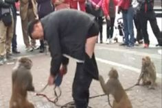 Chinese street performer left red-faced after Cheeky Monkey pulls down man's trousers during street performance gone wrong.