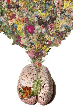 anatomical collages by travis bedel floral brain anatomy illustration flower Collage Kunst, Art Du Collage, Surreal Collage, Travis Bedel, Collages, Brain Art, Brain Drawing, Medical Art, Photocollage