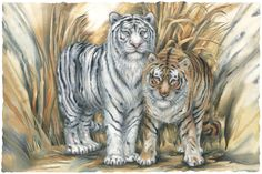 Bergsma Gallery Press :: Paintings :: Natural Elements :: Wild Land Animals :: Wild Cats :: Together... Our Differences Make Us Stronger - Prints
