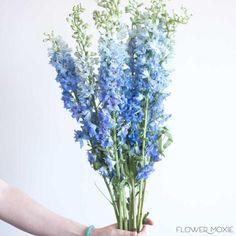 Wedding Flower Guide, Blue Wedding Flowers, Diy Wedding Bouquet, Bridal Flowers, Larkspur Wedding Flowers, Wedding Ideas, Blue Flowers Bouquet, Flowers Vase, Wedding Blue