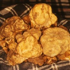 Home page. National Exhibition of the White Truffle of the Marches