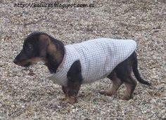ARTESANATO COM QUIANE - Paps,Moldes,E.V.A,Feltro,Costuras,Fofuchas 3D: Molde roupinha de cachorro                                                                                                                                                     Mais