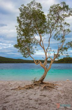 Lake Mackenzie on Fraser Island - One of our top 50 things to do in Queensland, Australia. Click inside for more tips!