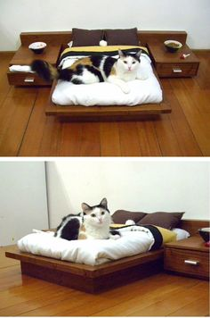 A platform bed for our cats, complete with night stands. Perfect for the crazy cat lover in your life.  #OhlandtVet #CatFurniture