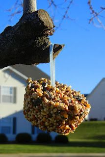 DIY Birdseed Cupcakes!