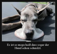 Es ist so mega heiß dass sogar der Hund schon schmilzt… It is so hot that even the dog melts … Funny Friday Memes, Funny Animal Memes, Funny Animals, Cute Animals, Funny Memes, Really Funny, Funny Cute, Hilarious, Funny Picture Jokes