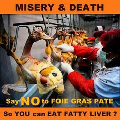 So you can eat fatty liver?