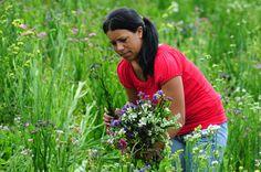 Floricultor, Colonia Tovar, Estado Aragua, Venezuela.