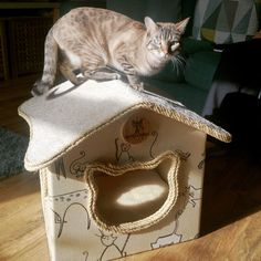 First #catcottage customer and kitty loves their new #catbed #cathouse 💜💜