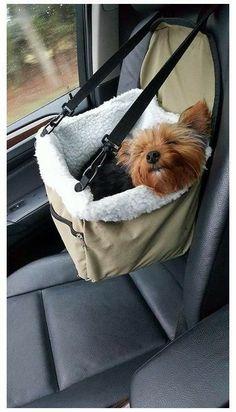Dog Accesories, Pet Accessories, Car Interior Accessories, Dog Car Seats, Small Dog Car Seat, Dog In Car, Puppy Car Seat, Dog Car Booster Seat, Gato Gif