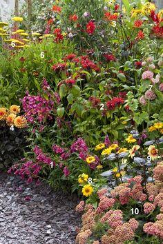 In deze border zijn vaste planten gemengd met eenjarige dahlia (alleen leverbaar van januari tot mei). Langs de rand donkerpaarse slangenkop  Penstemon (1), naast een pompondahlia (4), gevolgd door gele zonneogen Heliopsis (8) en vlindertrekker duizendblad Achillea (10). Hierachter staan hogere planten, rode Crocosmia (3), tweekleurige kokardebloem Gaillardia (9) en geel duizendblad Achillea (6) . Stokroos Alcea (7) torent er boven uit. Hierdoor bloeit de border door tot in de nazomer.
