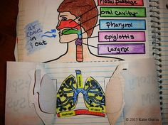 Respiratory System Foldables by Mrs G Classroom Brain Anatomy, Anatomy And Physiology, Middle School Classroom, Middle School Science, Teaching Activities, Teaching Science, Respiratory System, Respiratory Therapy, Circulatory System