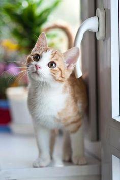Orange Tabby Cat Near Window · Free Stock Photo Cute Kittens, Cats And Kittens, Chats Tabby Oranges, Coco Chat, Cute Cat Wallpaper, Orange Tabby Cats, Dog Activities, Cat Behavior, Tier Fotos