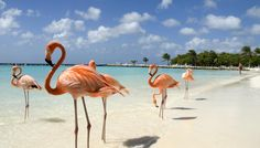 Badeurlaub auf Aruba im bunten Oranjestad - 9 Tage ab 648 € | Urlaubsheld