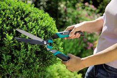 Gardena Boxwood Hedge Trimmer * Check out this great product. Shears Scissors, Boxwood Hedge, Pruning Shears, Hedges, Garden Tools, Check, Gardening Scissors, Yard Tools, Living Fence