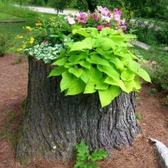 Wow!! Those annoying tree stumps can make a beautiful flower pot.