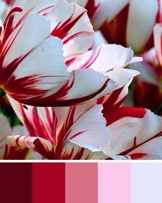 Candy cane flowers color palette
