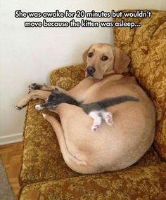 Elle était réveillée depuis 20 min mais ne bougeait pas parce que le chaton s'était endormi 1c233942c8886d958ac516c49d8c64e3.jpg 540×654 pixels