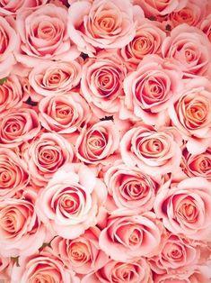 Pink roses iphone wallpaper