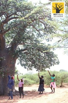 Monitoring Baobab trees with harvesters Dr Sarah, Baobab Tree, Conservation, Dolores Park, Survival, Trees, Plants, Tree Structure, Planters