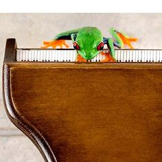 Piano Art Music Frog Humor 8x10 Grand Piano by FrogFun on Etsy, $25.00